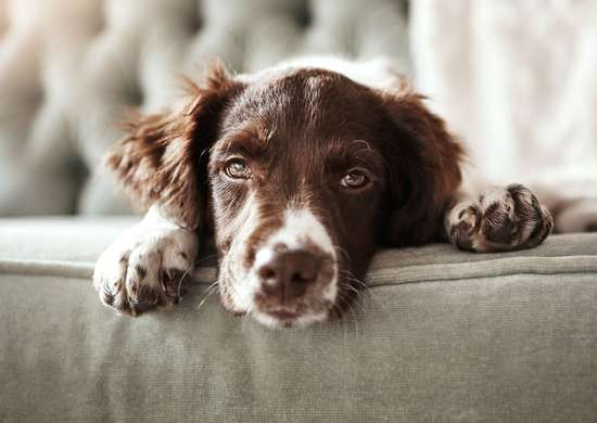 How to Remove Pet Hair from Microfiber Couch