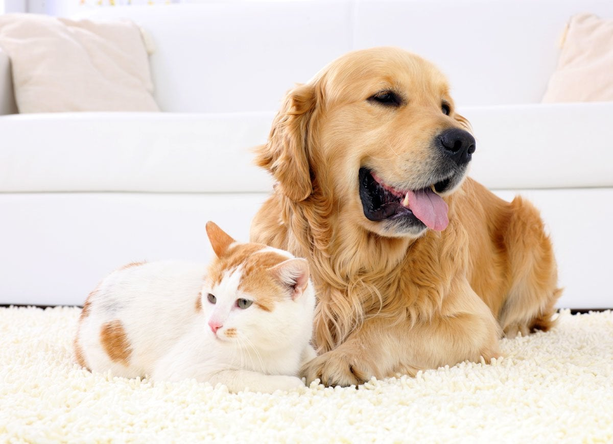 Pets carpet