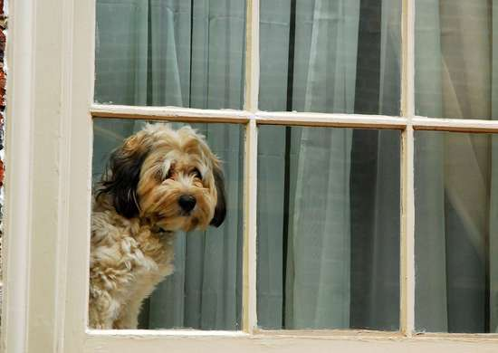 How to Remove Pet Hair from Curtains