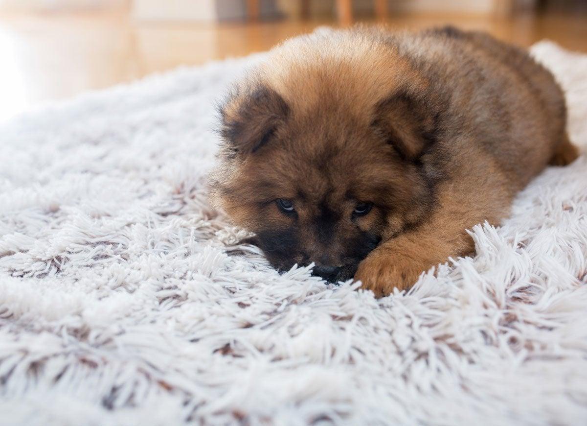 Pet rug
