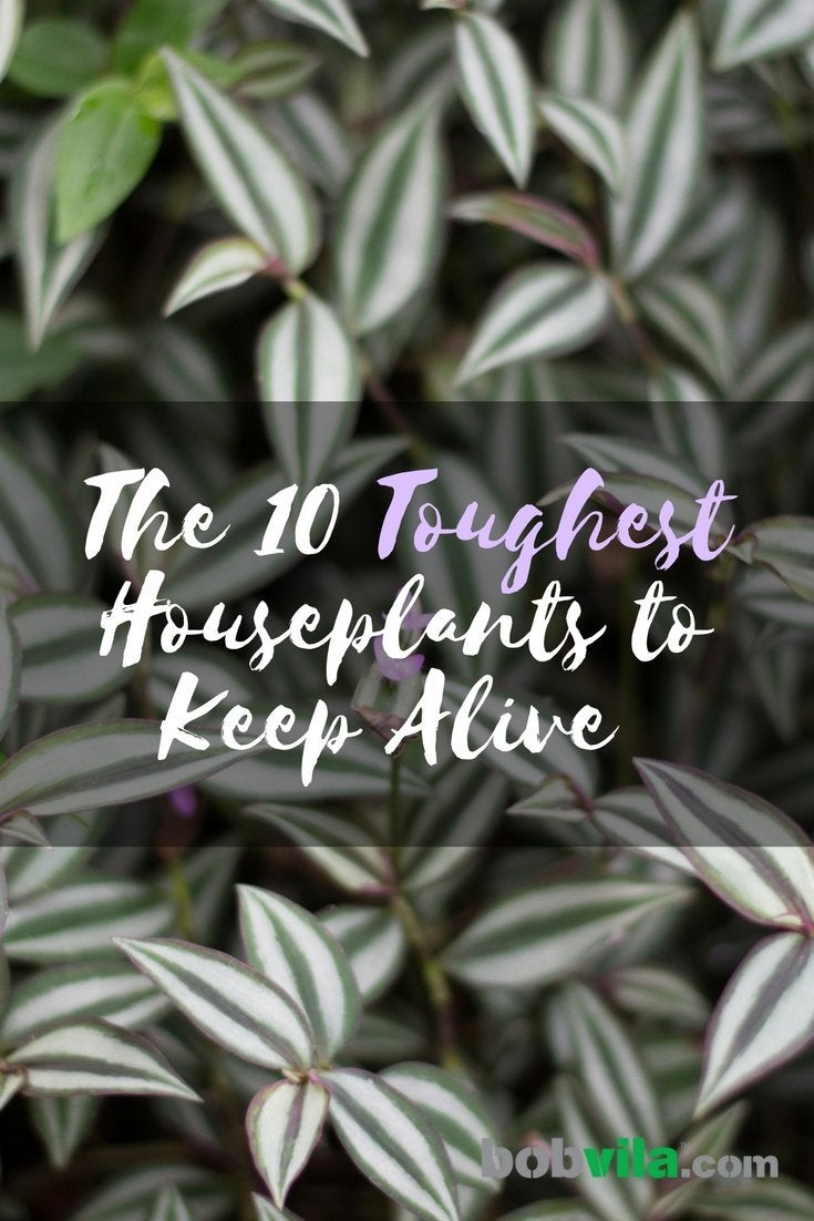 The 10 toughest houseplants to keep alive