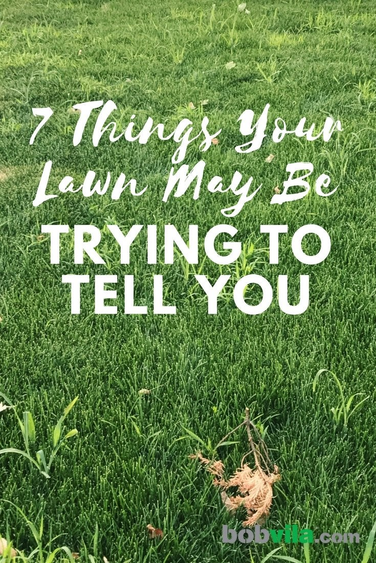 7 things your lawn may be trying to tell you