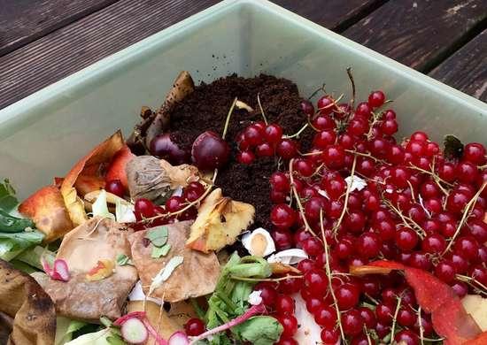 Compost Tea Fertilizer
