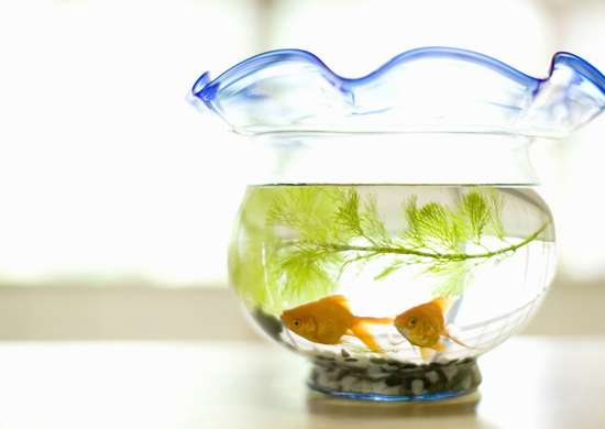 Fish Tank Water For Plants