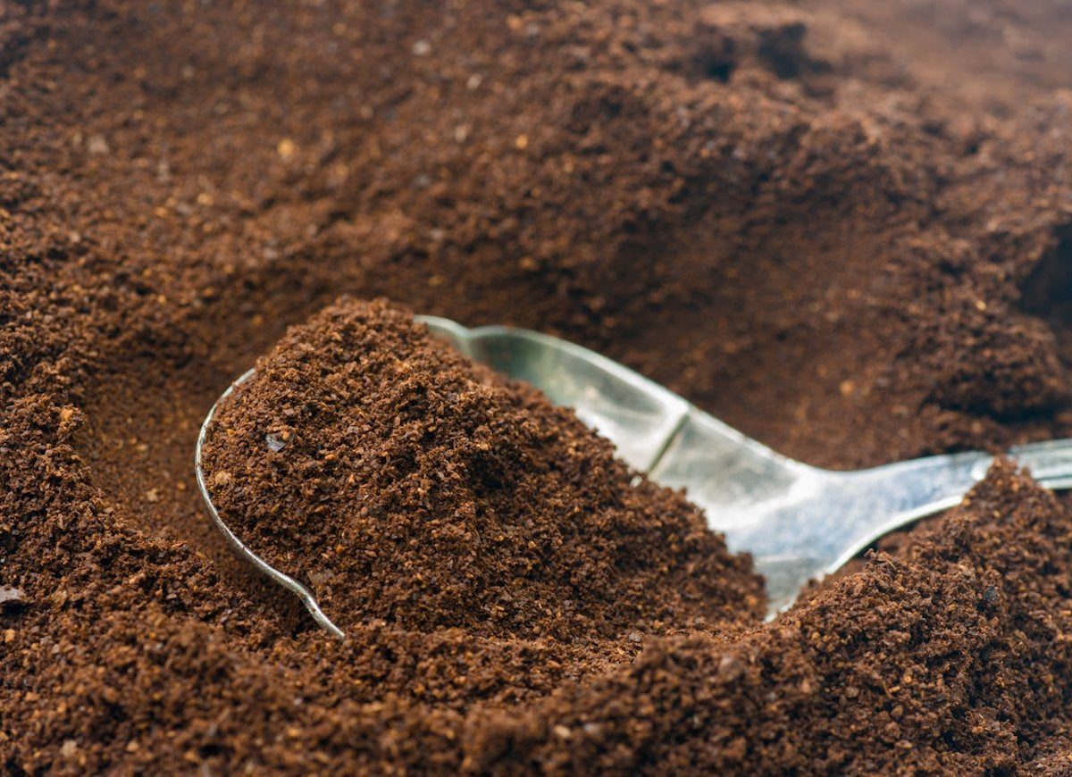 Coffee grounds garden