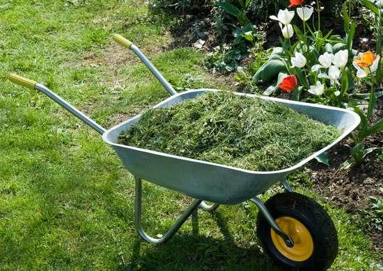 Grass Clippings In Garden