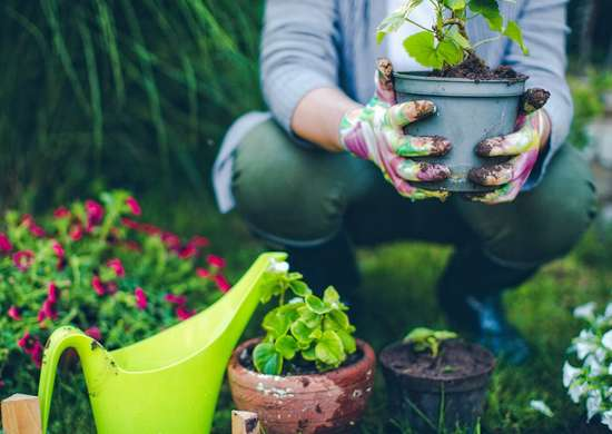 DIY Plant Food