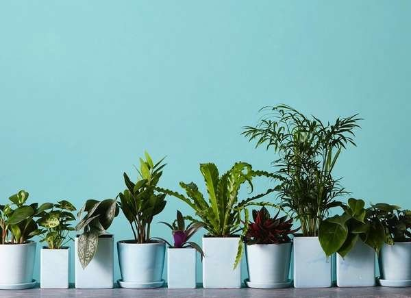 Where to Buy Plants Online - 11 Shops for Cheap, Rare, or
