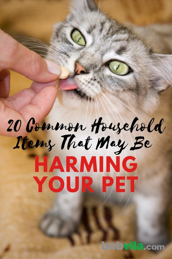 20 common household items that may be harming your pet