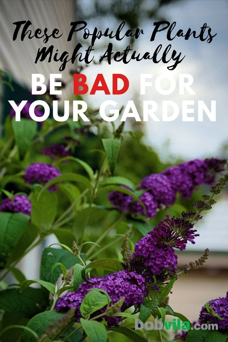 These popular plants might actually be bad for your garden
