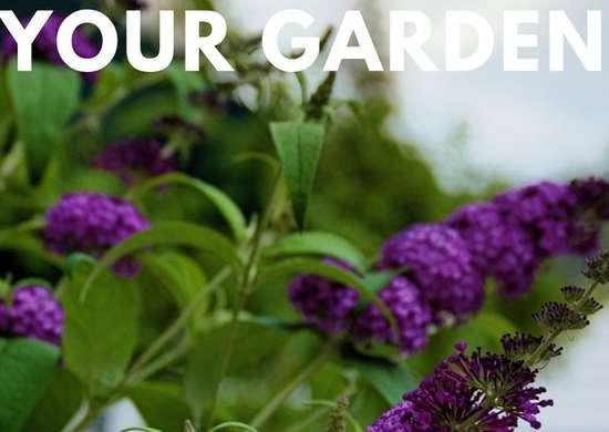Garden Trickery