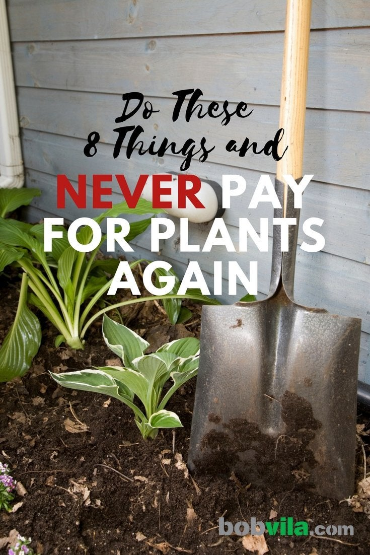 Do these 8 things and never pay for plants again