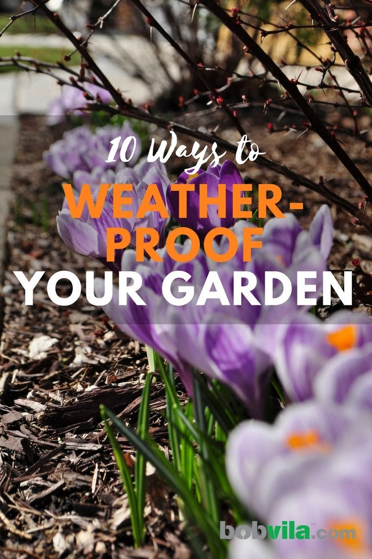 10 ways to weather proof your garden