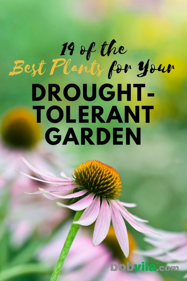 14 of the best plants for your drought tolerant garden