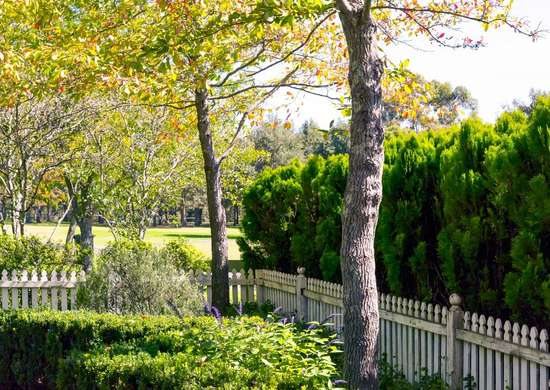 Maintain Trees for Curb Appeal