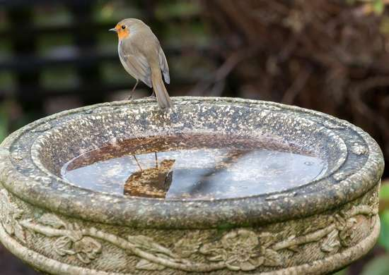 How to Maintain Birdbaths
