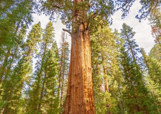 Sequoia National Park In California