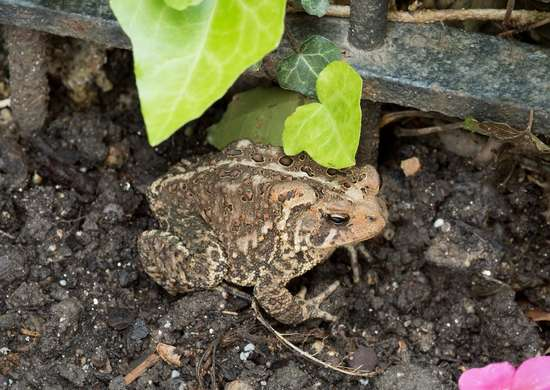 Invite a Toad to Stay