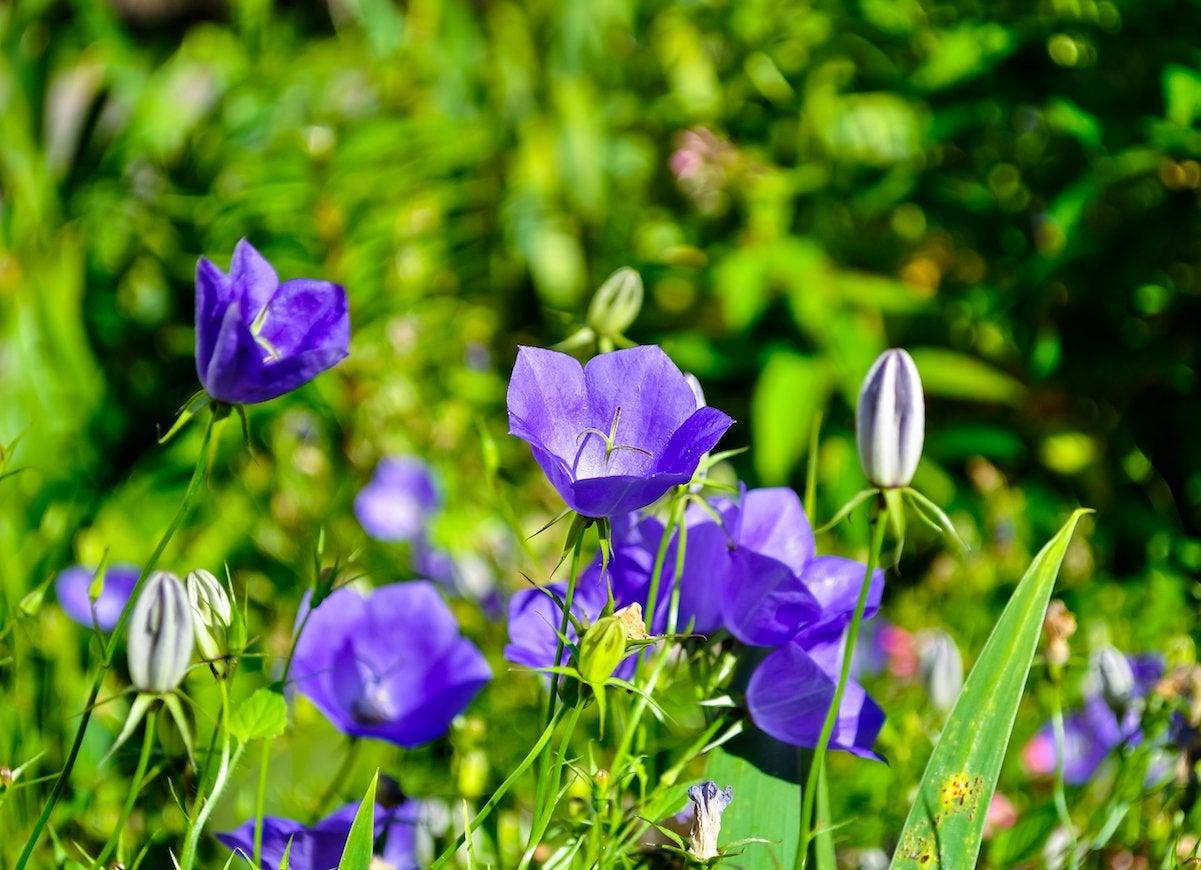 Self seeding flowers
