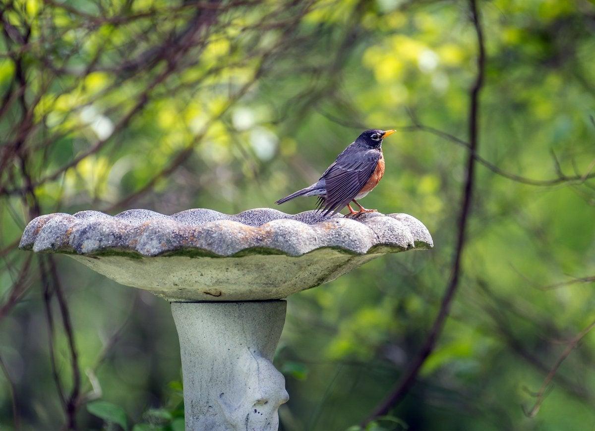Birds eat pests