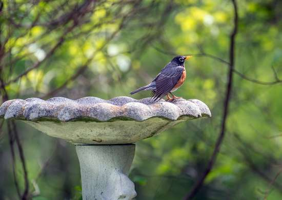 Get Birds to Eat Your Pesky Bugs