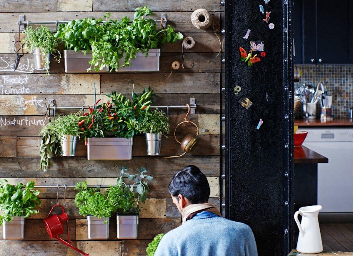Indoor plant ideas wall garden