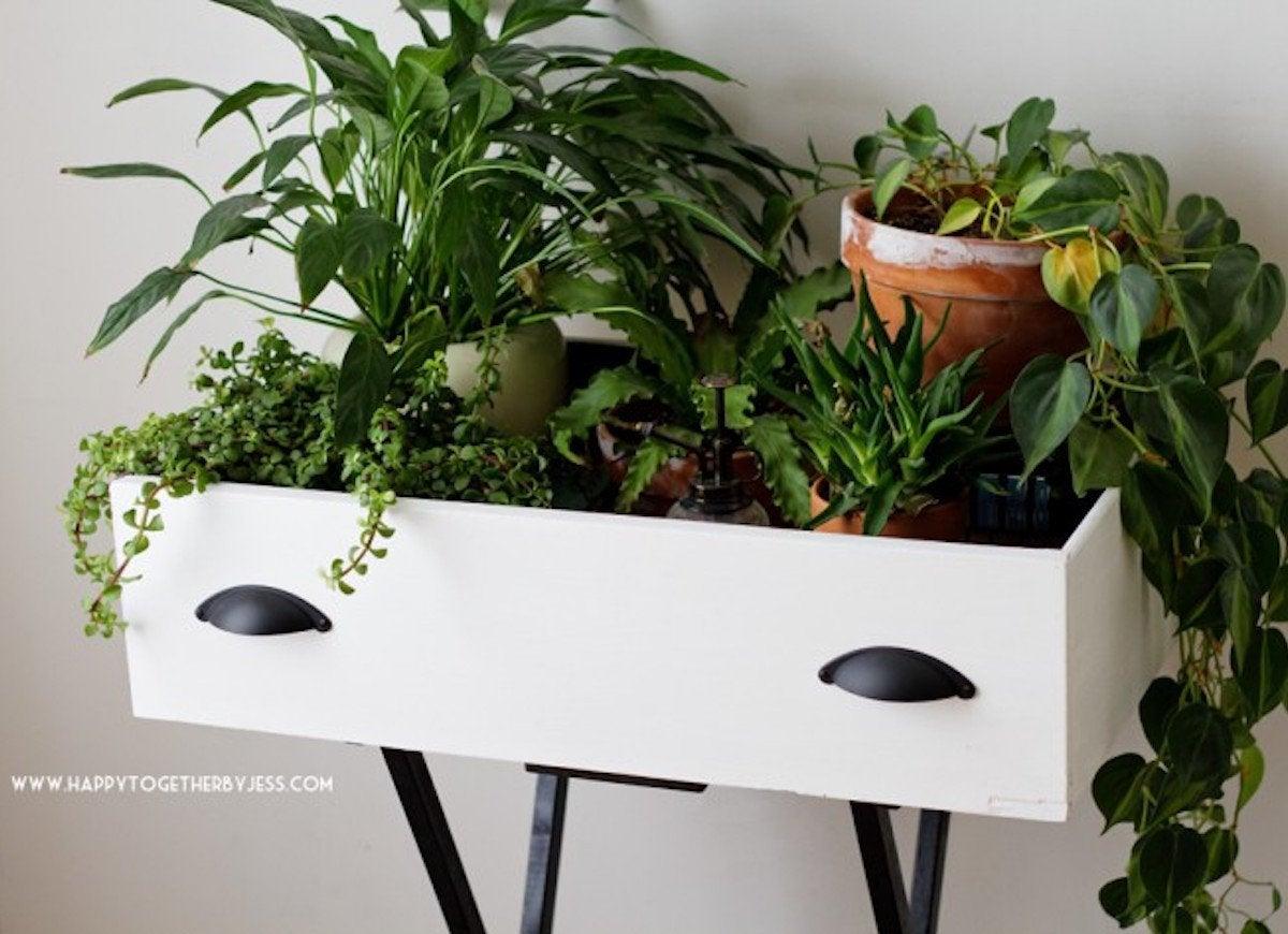Plant ideas drawer planter