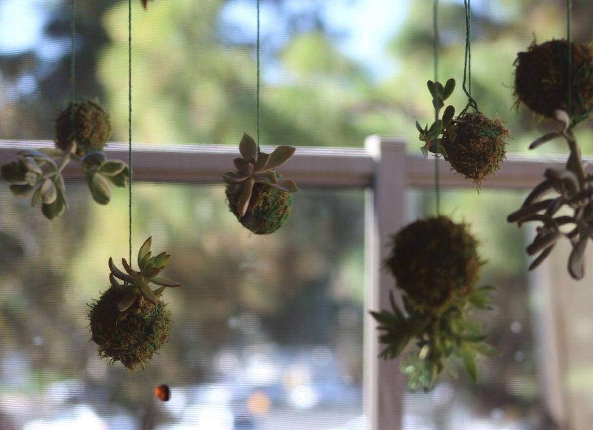 Hanging plants kokedamas