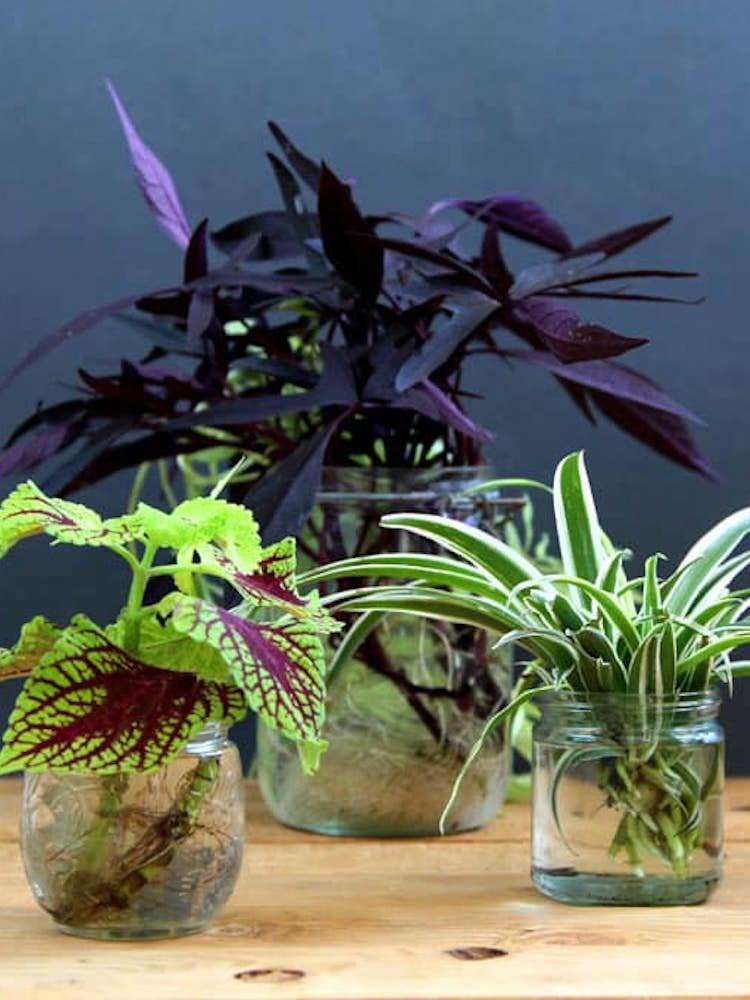 Grow indoor plants in water