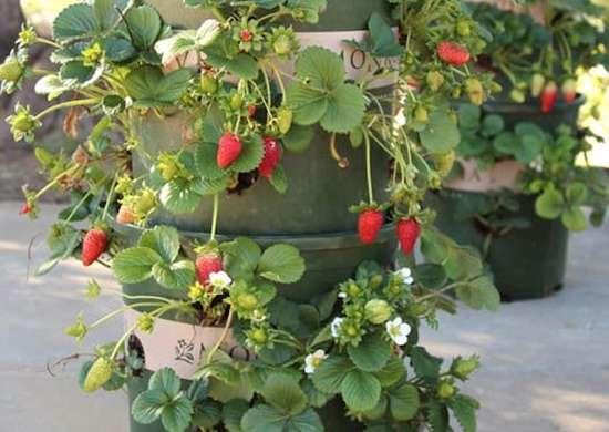 Strawberry Tower DIY