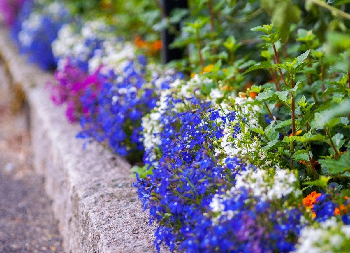 Image of: Landscape Edging Ideas 12 Easy Ways To Set Your Garden Beds Apart Bob Vila