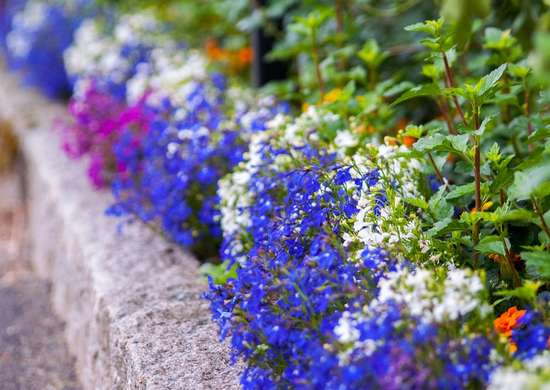 Edge Your Beds: 12 Easy Ideas for Landscape Borders
