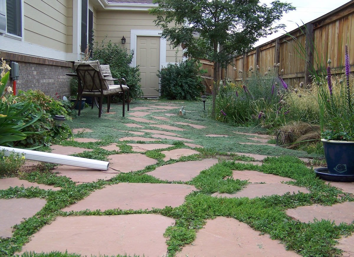 Sideyard flagstone ground cover