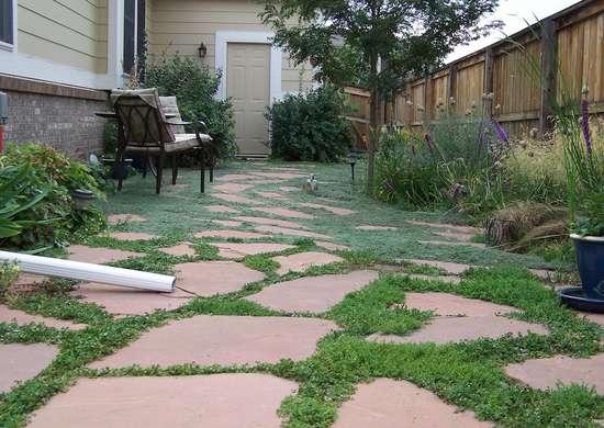 Grow Ground Cover Between Flagstones