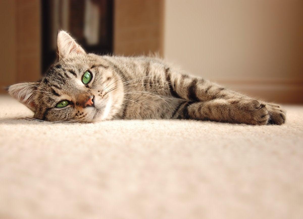 Kitty litter carpet