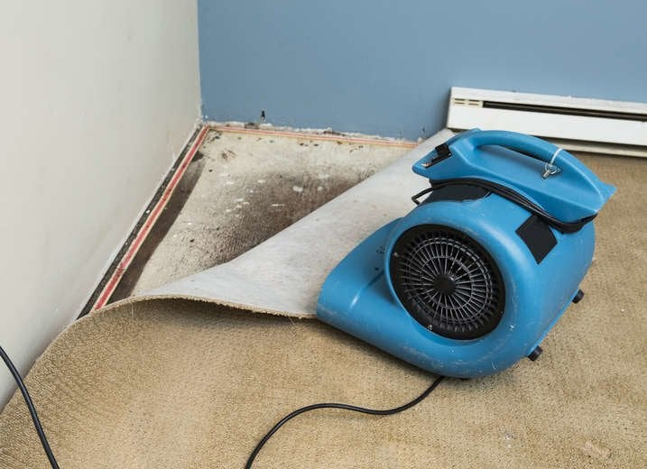 Mold In Carpet
