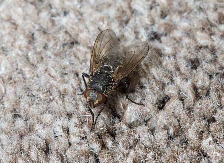 Bugs In Carpet