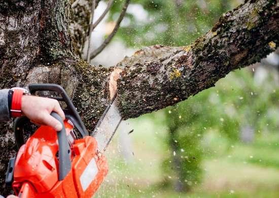 Tree Electrocution
