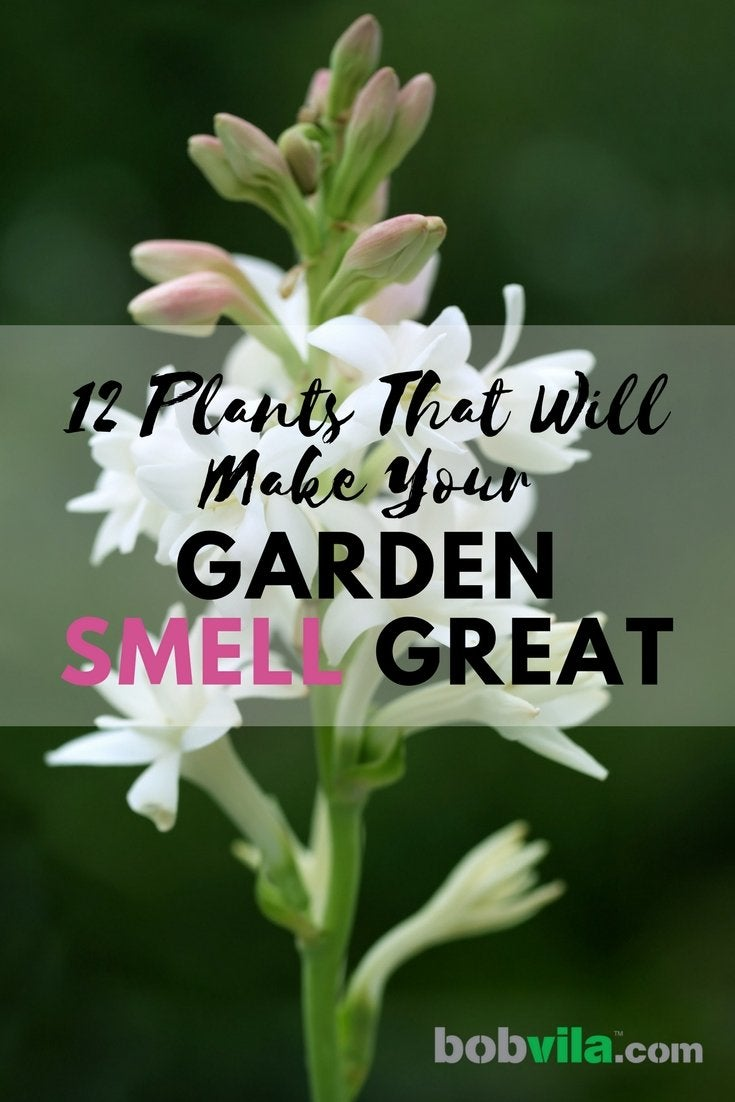 12 plants that will make your garden smell great