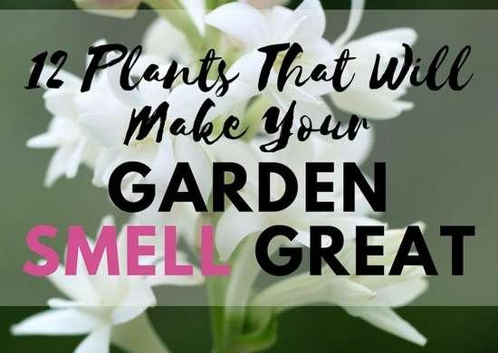 A Scent-sational Garden