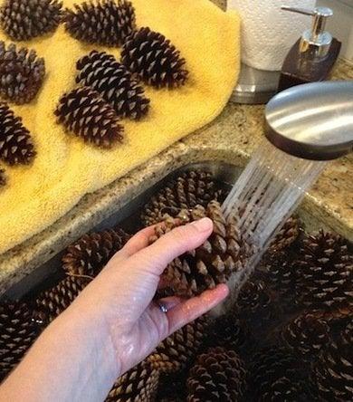 Washpinecones