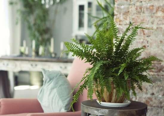 Houseplants Interior Design