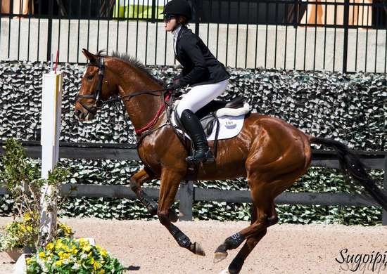 North Carolina: Tryon International Equestrian Center