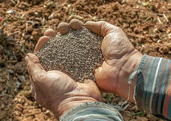 Amendments for Garden Soil