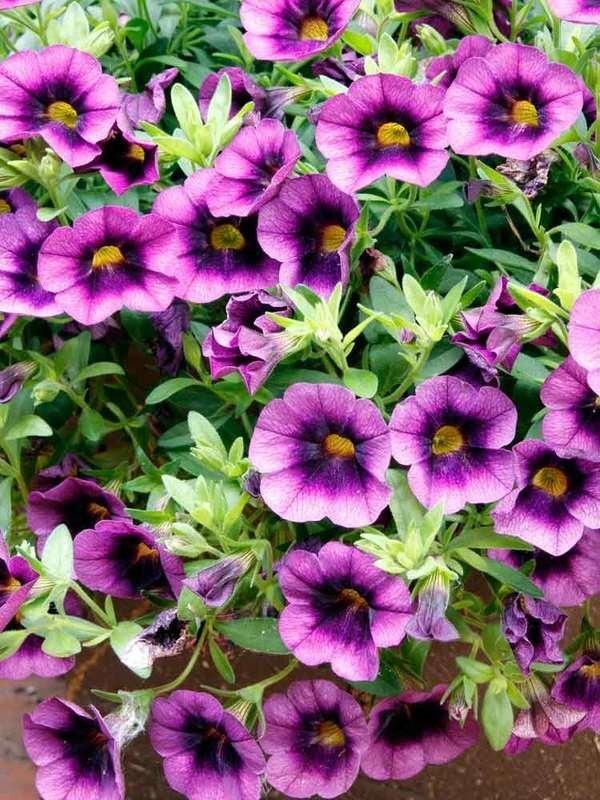 14 Long Lasting Flowers For Your Yard Bob Vila