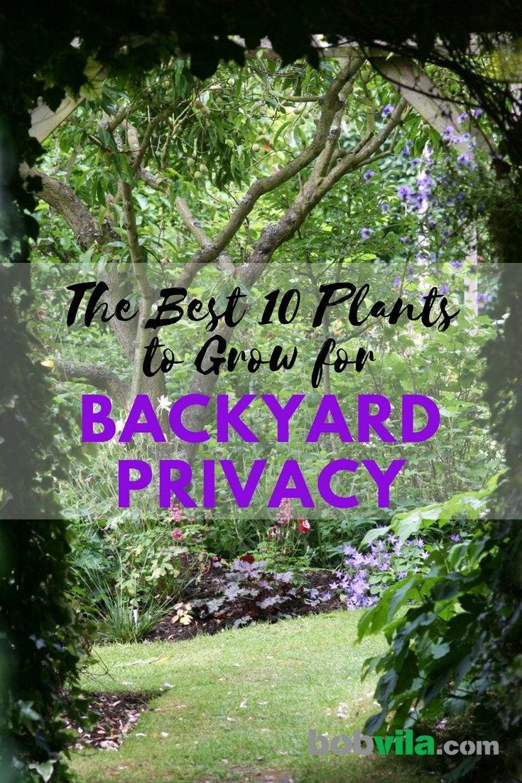 backyard privacy  10 best plants to grow