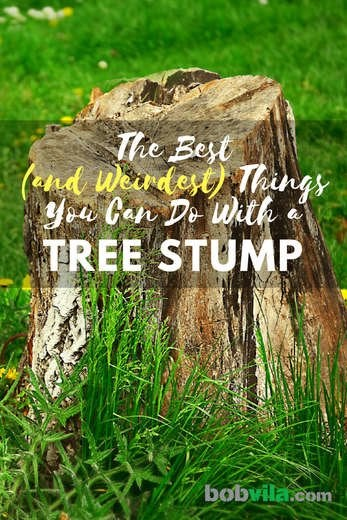 Don't Get Stumped