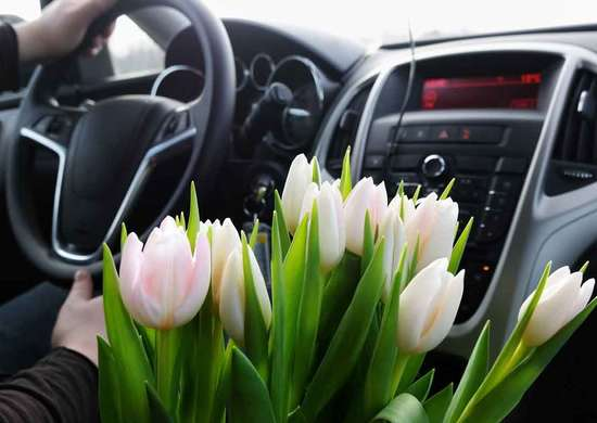 Can You Leave Plants in a Hot Car?
