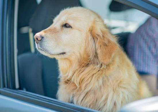 Can You Leave Pet Food in a Hot Car?