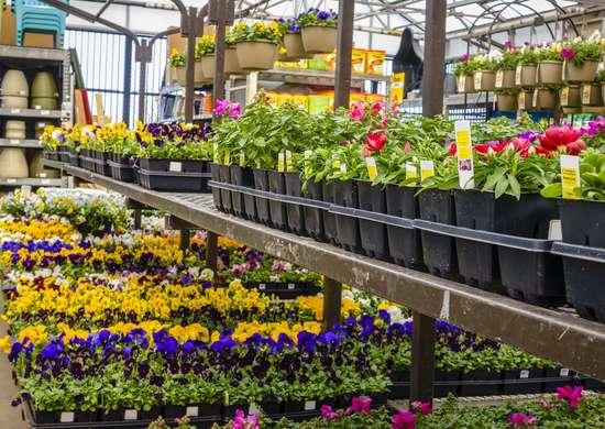 Home Depot Return Plants